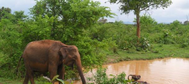 Vivre une expérience unique avec safarivo