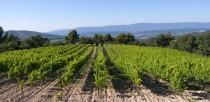 Un vin de provence renomméJe bois un vin de provence de prestige